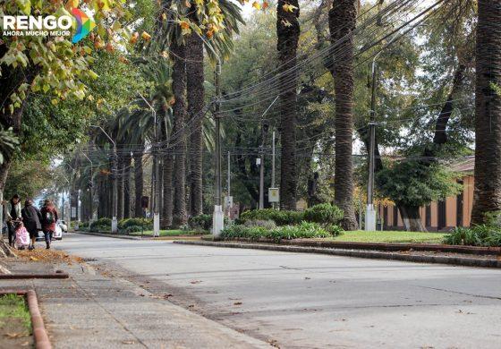 PREINFORME DE CONAF ENTREGA IMPORTANTES DATOS DE ARBOLEDAS DE BISQUERT